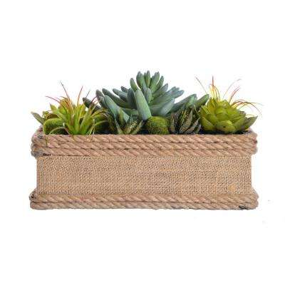 11.5 in. x 7 in. x 6.5 in. Tall Succulents in Hemp Rope Container