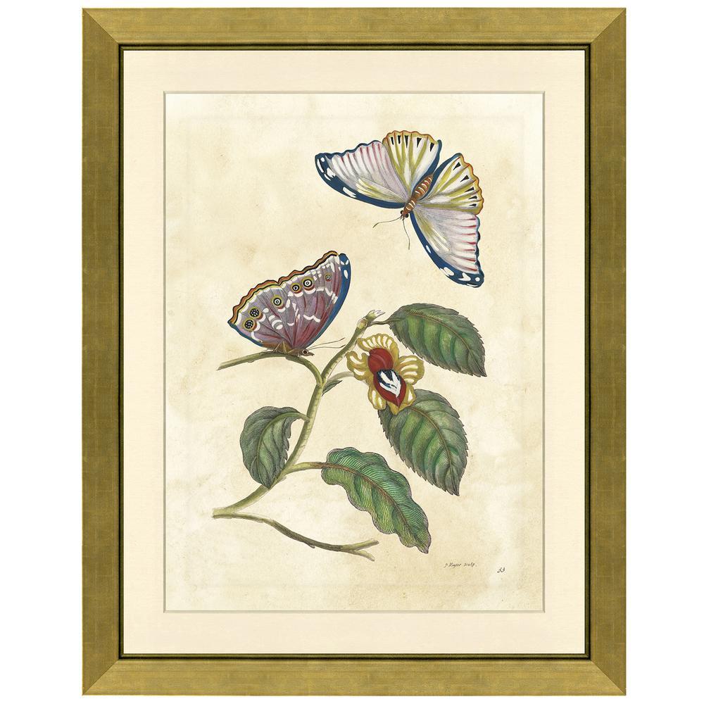 Butterfly in flight Framed Archival Paper Wall Art (26 in. x 32 in. in full size)