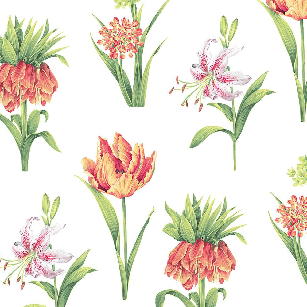 Norwall botanical floral wallpaper pa34234 the home depot - Floral wallpaper home depot ...