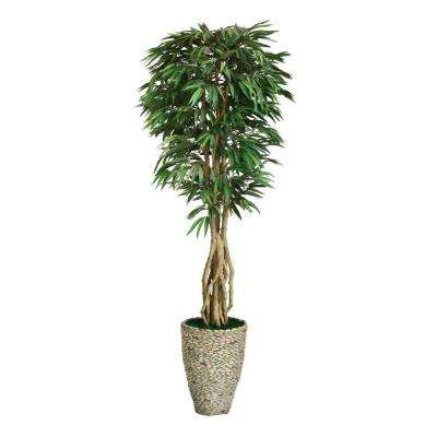 92 in. Tall Willow Ficus with Multiple Trunks in 16 in. Fiberstone Planter