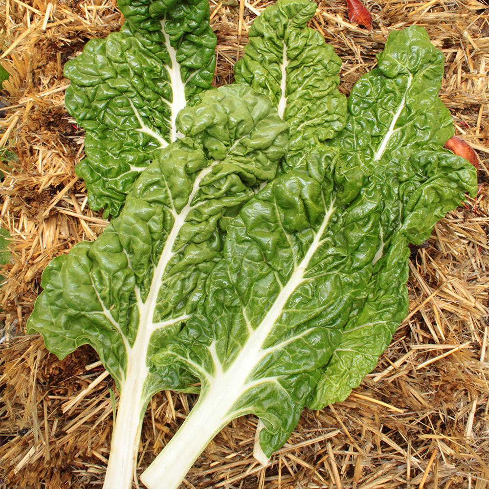 Seeds of Change Chard Fordhook Seeds Pack
