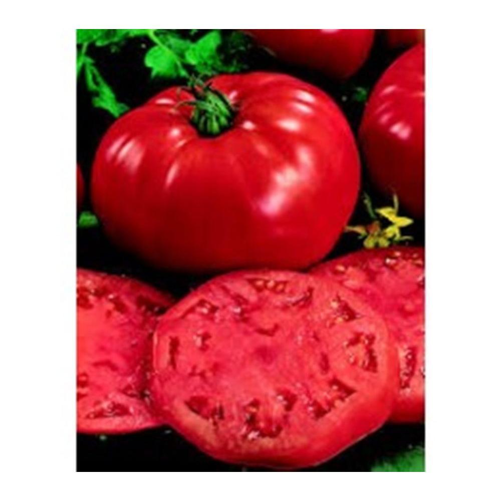Heirloom Beefsteak Tomato, Live Plant, Vegetable, 4.25 in. Grande