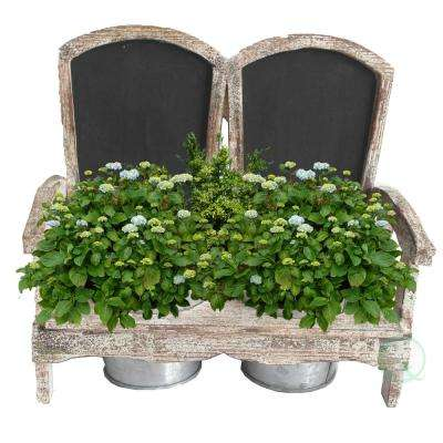 11.4 in. W x 5.8 in. D x 10 in. H Wood Adirondack Chair Planter