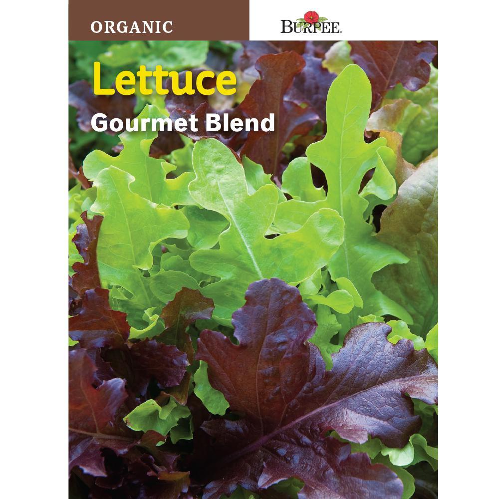 Lettuce Gourmet Blend Seed