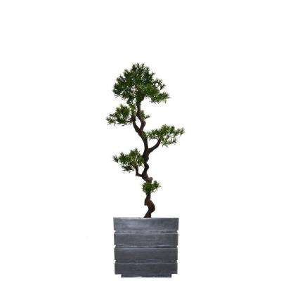 54 in. Tall Yacca Tree in Planter