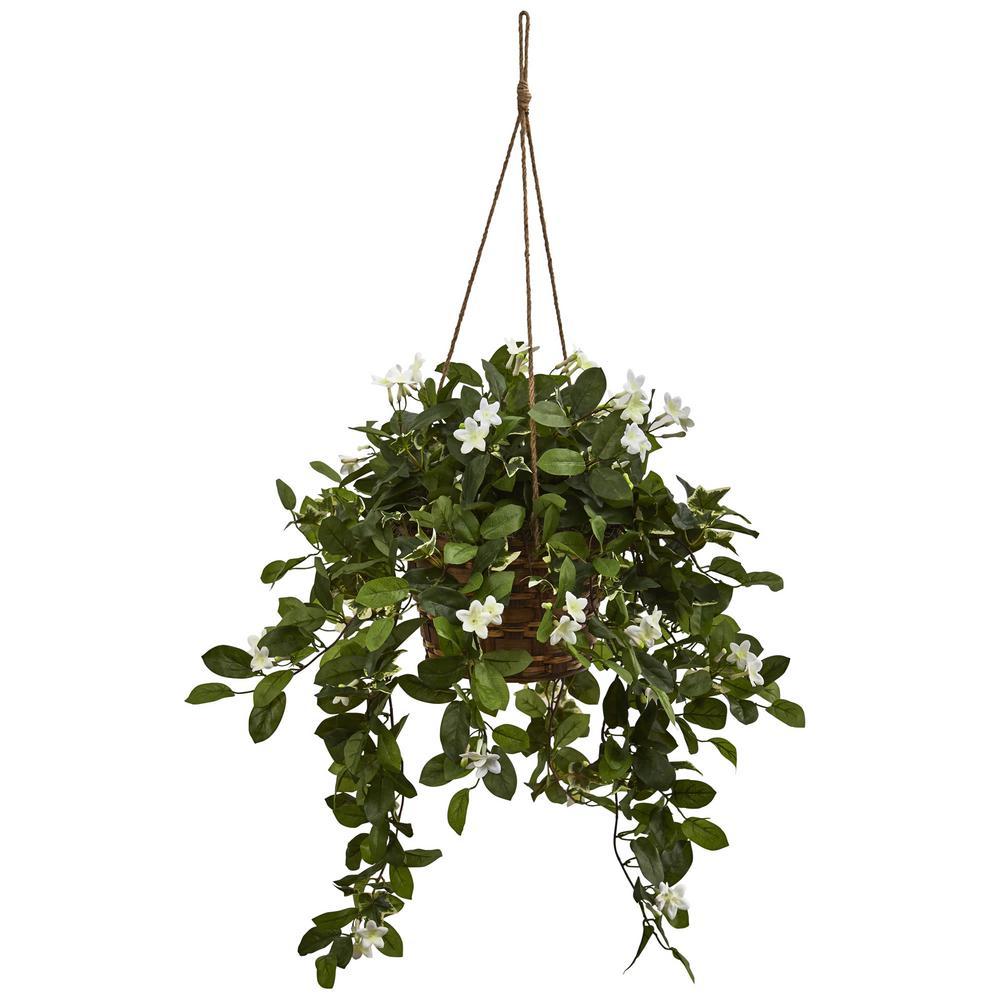 Mixed Stephanotis Hanging Basket