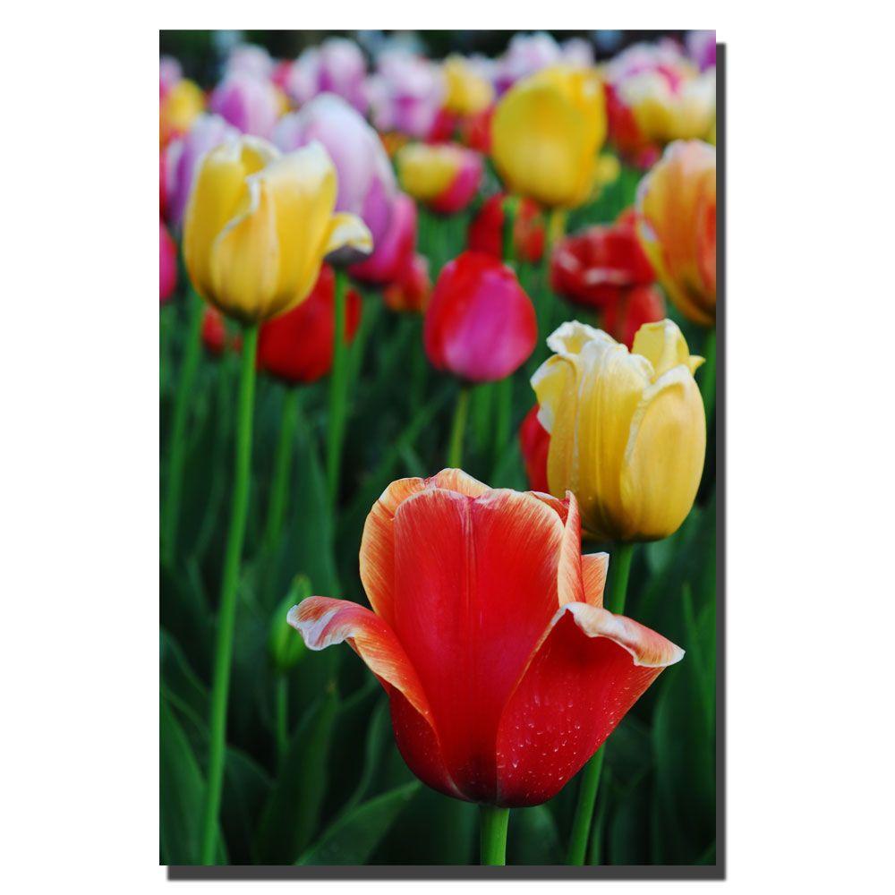 Trademark Fine Art 30 in. x 47 in. In Amont the Tulips II Canvas Art