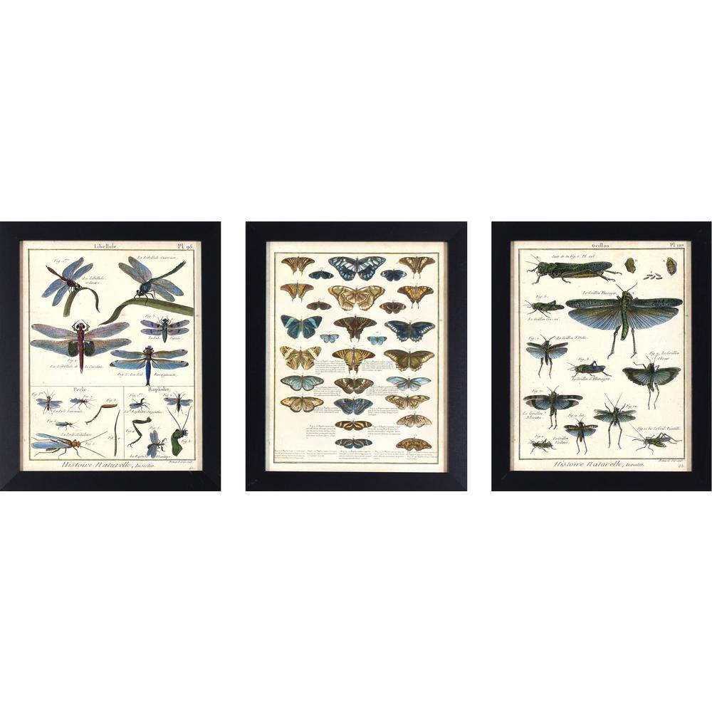 Decor Therapy 16 in. x 13 in. Butterfly and Insect Study Printed ...