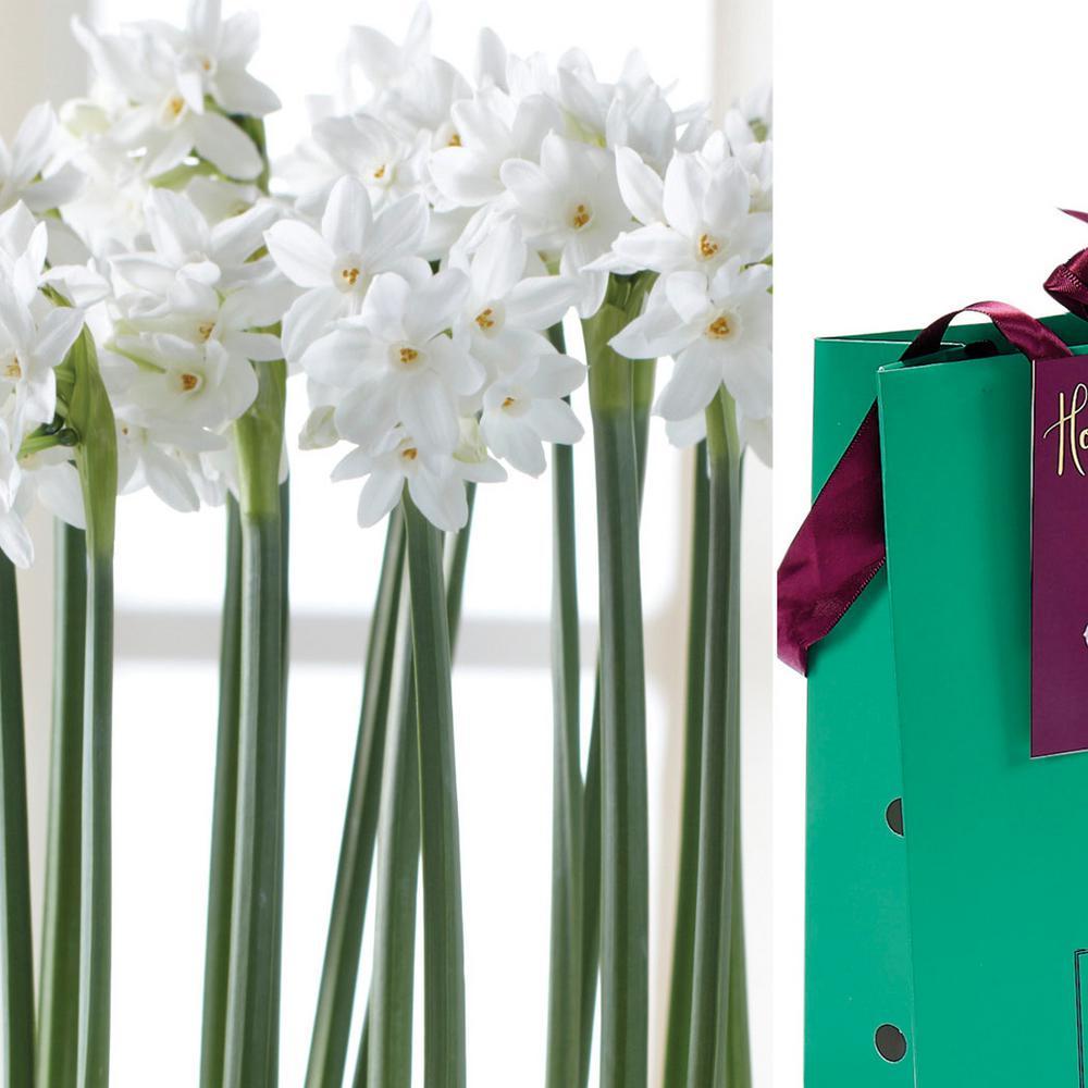 Paperwhite Bulb in Emerald Gift Bag (6-Bulbs)