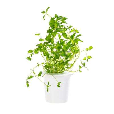 Oregano Refill (3-Pack) for Smart Herb Garden