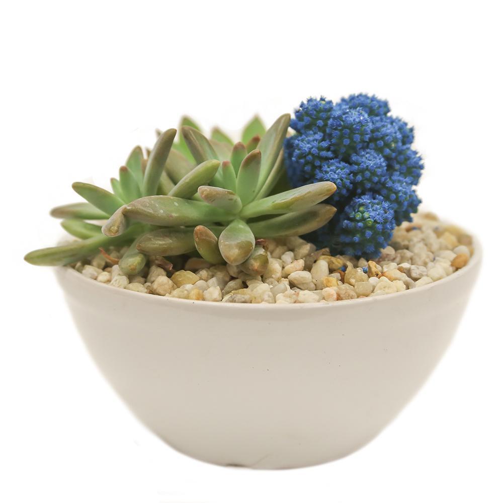 Blue Desert Gems Garden in 6 in. Gloss Ceramic Bowl