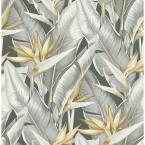 Arcadia Grey Banana Leaf Paper Strippable Roll Wallpaper (Covers 56.4 sq. ft.)