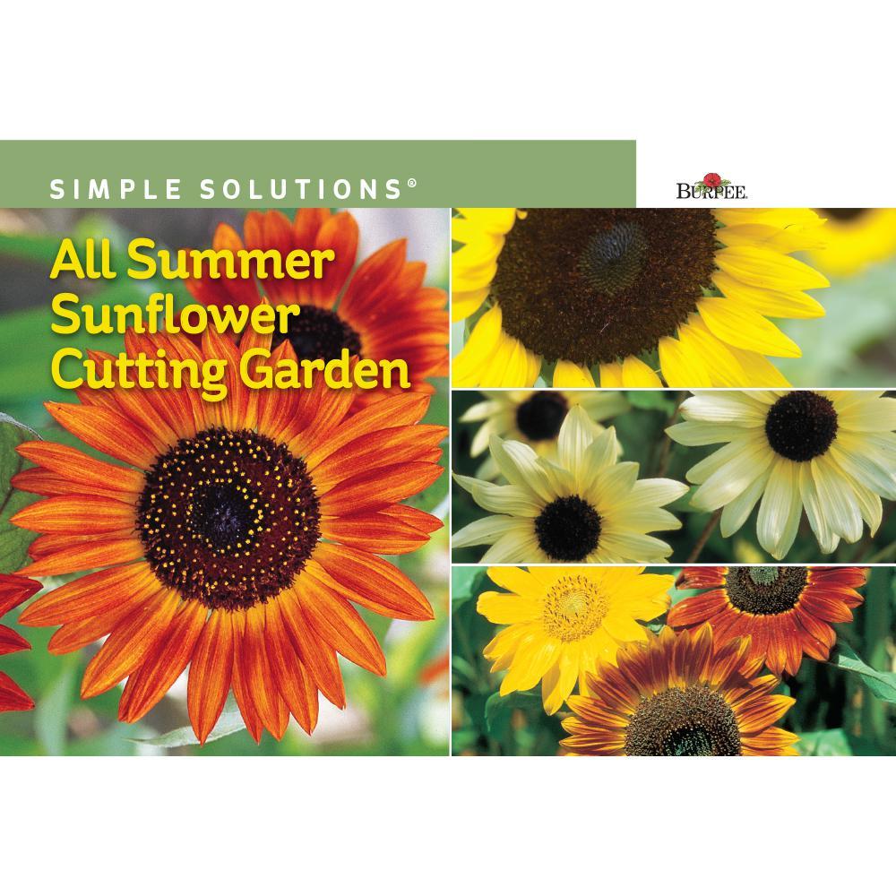 Simple Solutions All Summer Sunflower Cutting Garden Seed