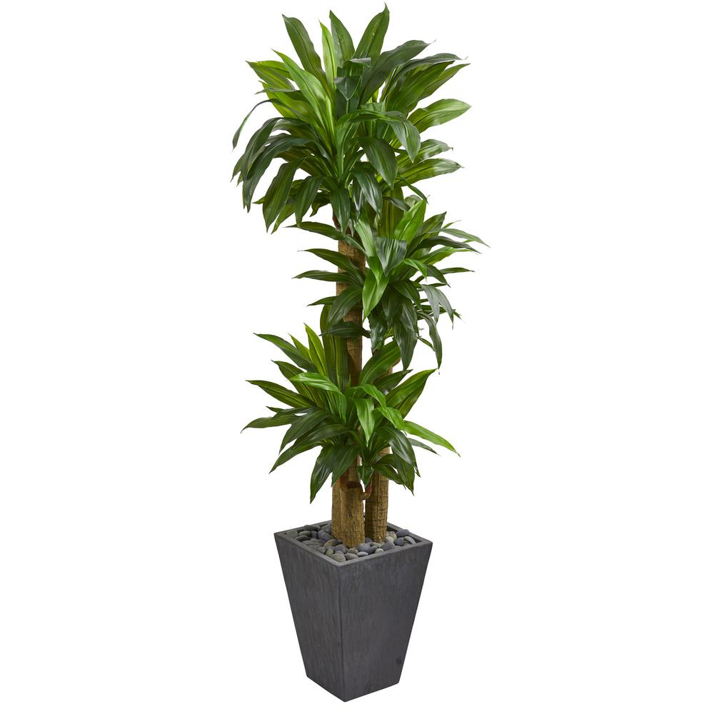Nearly Natural Real Touch 5 Ft Indoor Cornstalk Dracaena Artificial Plant In Slate Planter 6437 The Home Depot