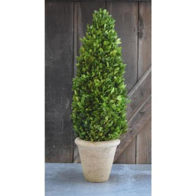 6 in. x 24 in. Large Box Cone Topiary