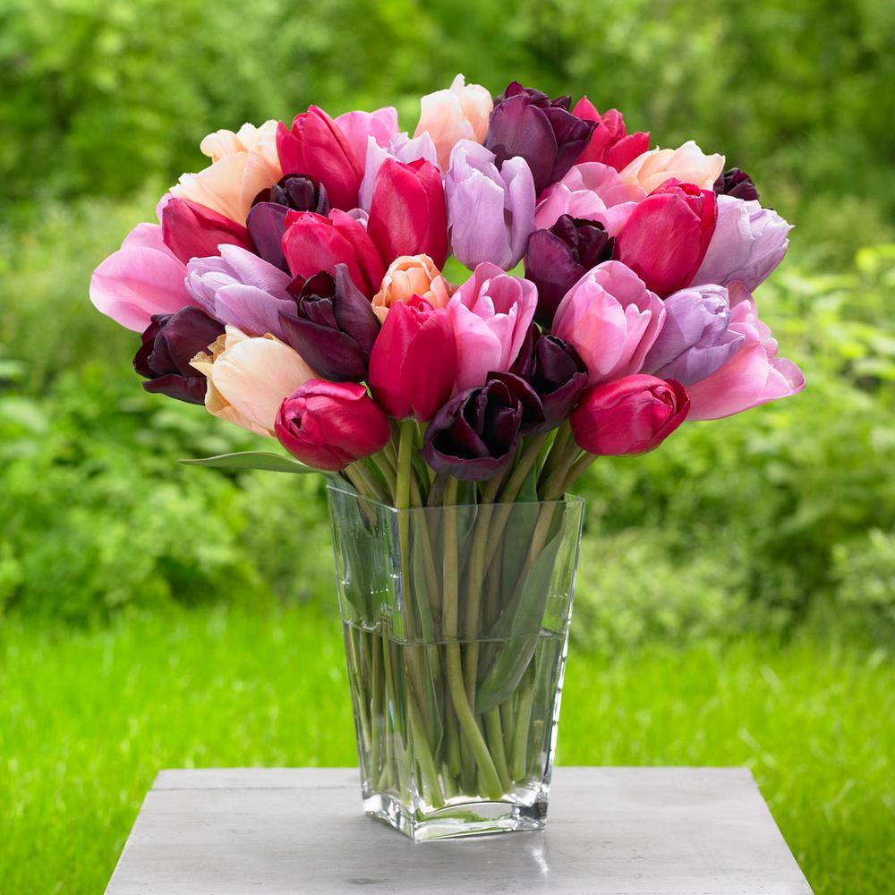 Tulip annual assorted colors flower bulbs garden plants tulip purple lady mix bulbs 25 pack mightylinksfo