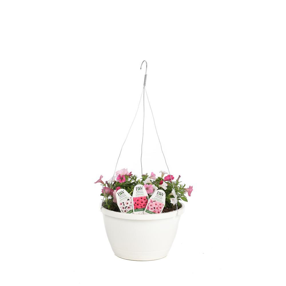home depot flowers hanging baskets