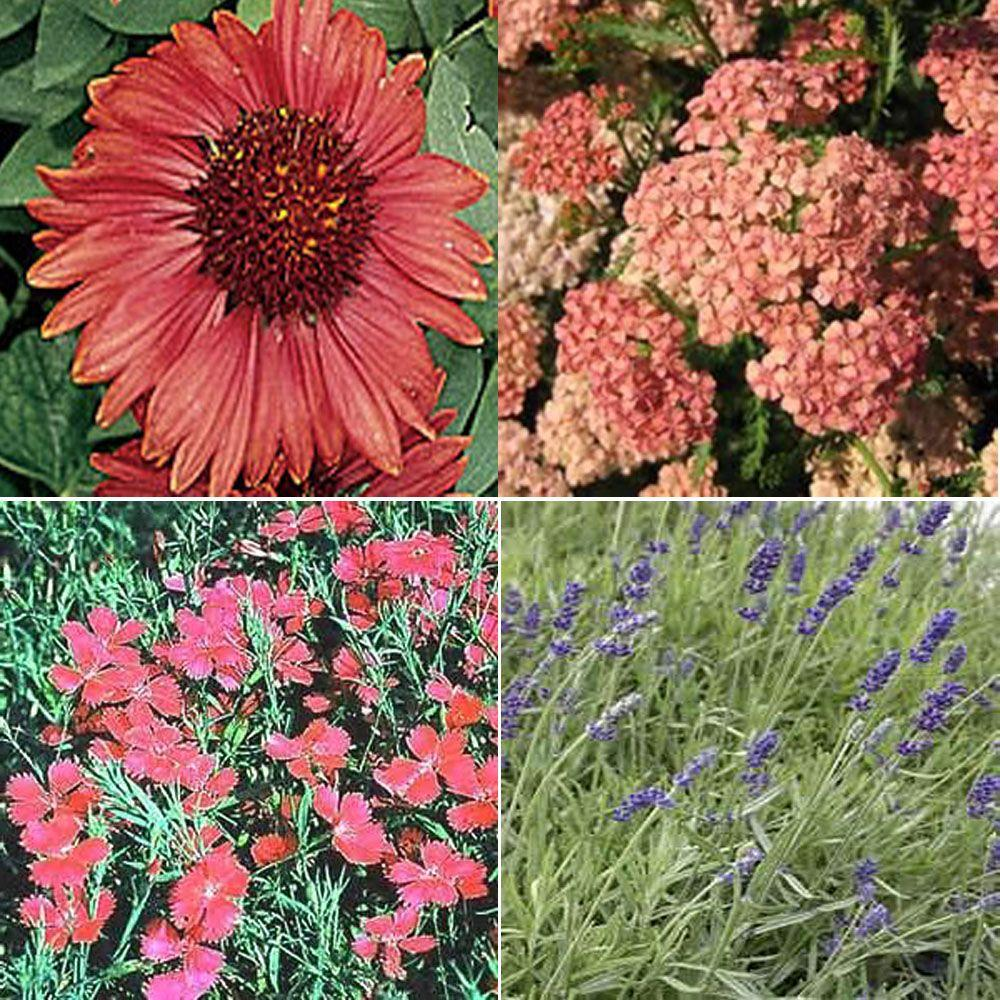 OnlinePlantCenter 1 gal. Full Sun Hot and Dry Garden 4 Live Plants Package