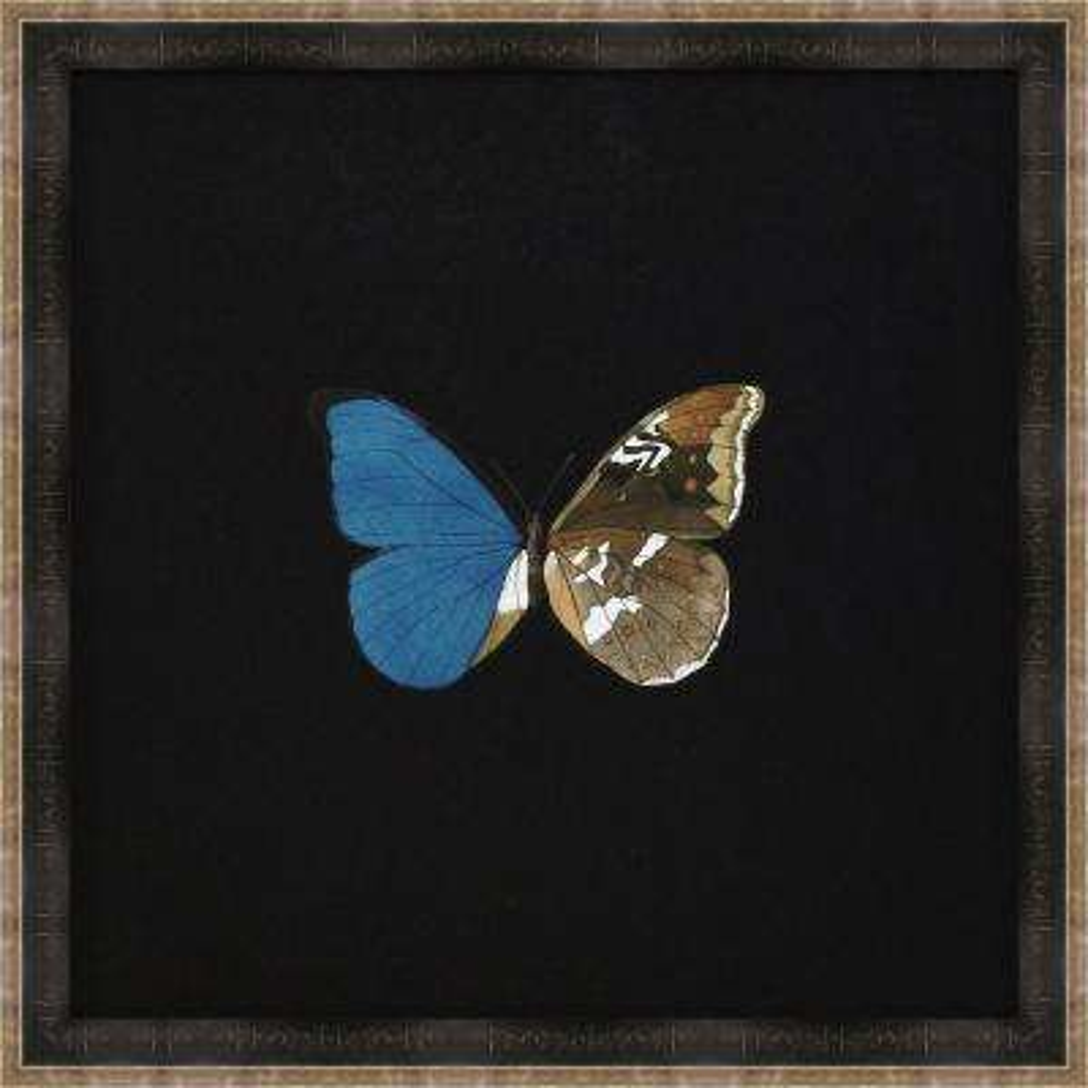 "18 in. x 18 in. ""Butterflies on Black V"" Framed Giclee Print Wall Art"