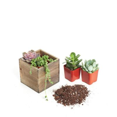 Sun Or Shade Succulents Plants Garden Flowers The Home Depot