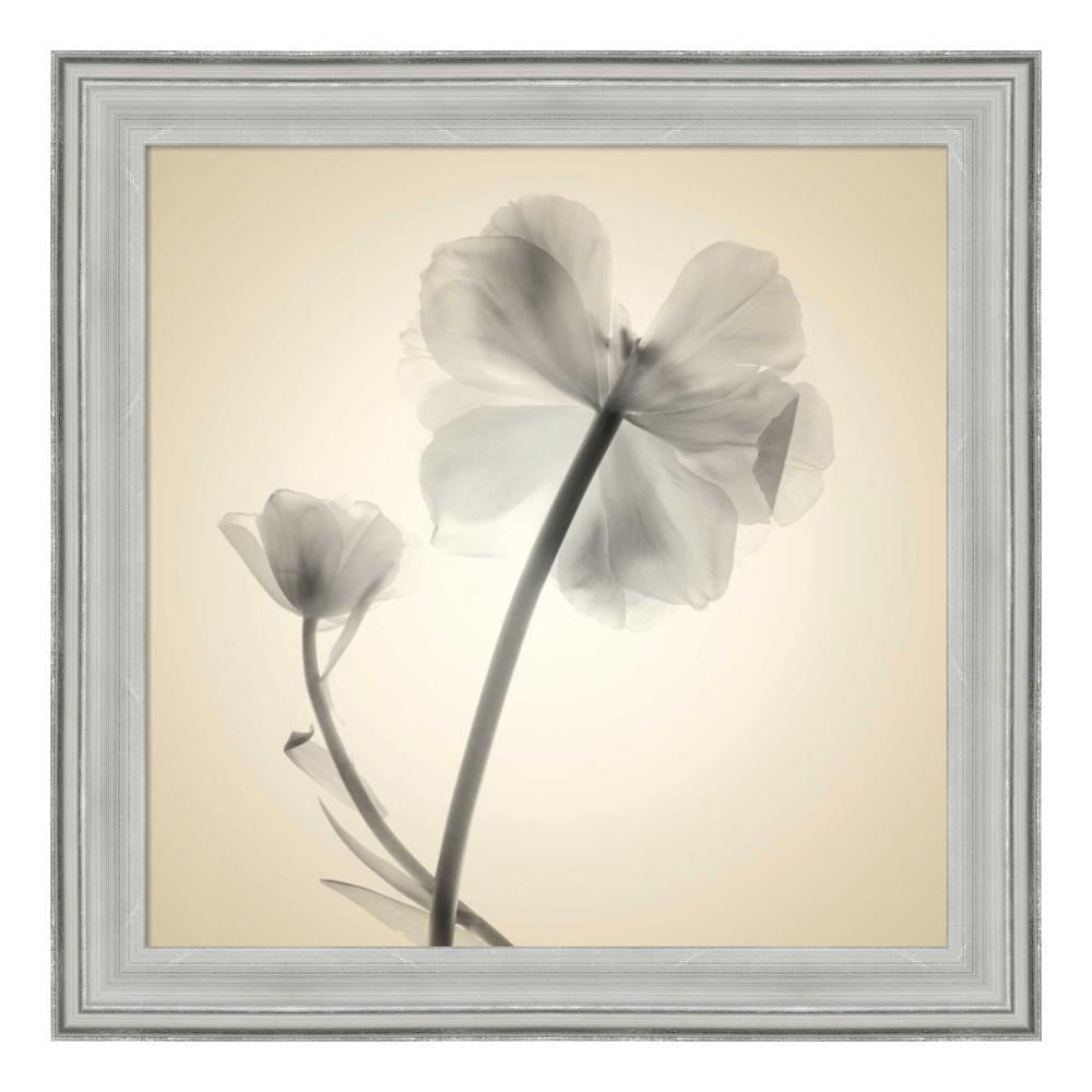 """Soft II"" by Judy Stalus Framed Canvas Wall Art"