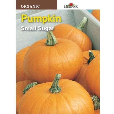 Pumpkin Small Sugar Organic Seed