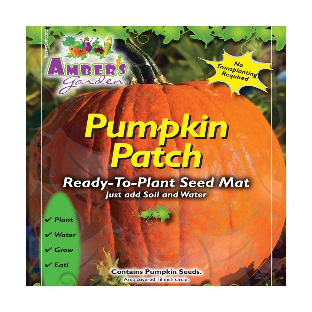 Amber's Garden Easy Pumpkin Seed Starting Kit