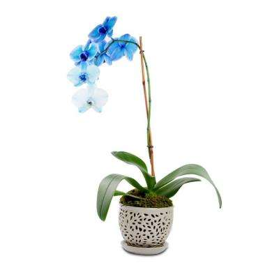 5.5 in. Flagstone Lacey Small Gray Ceramic Orchid Planter