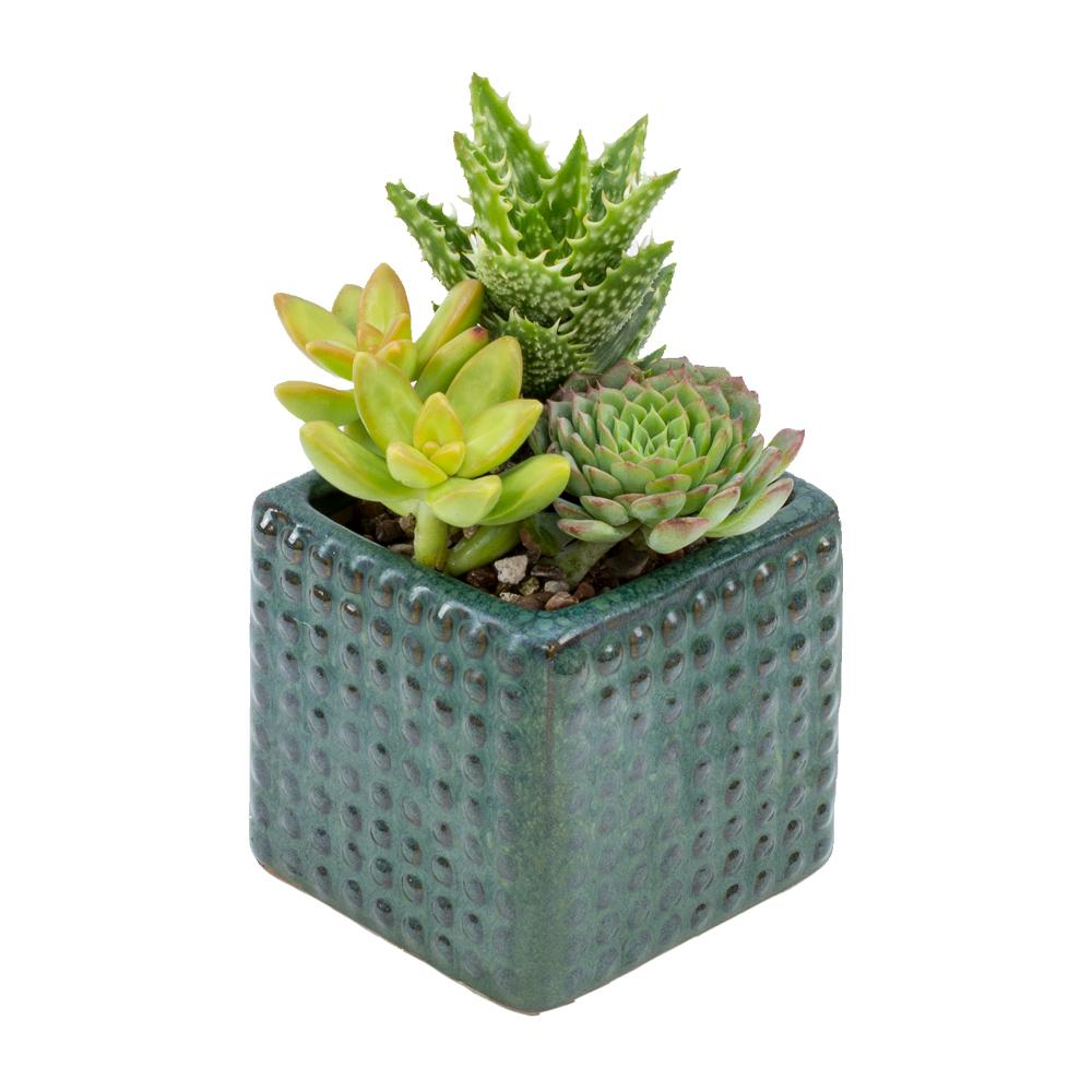 Null Living 3 In. Square Hobnail Succulent Garden