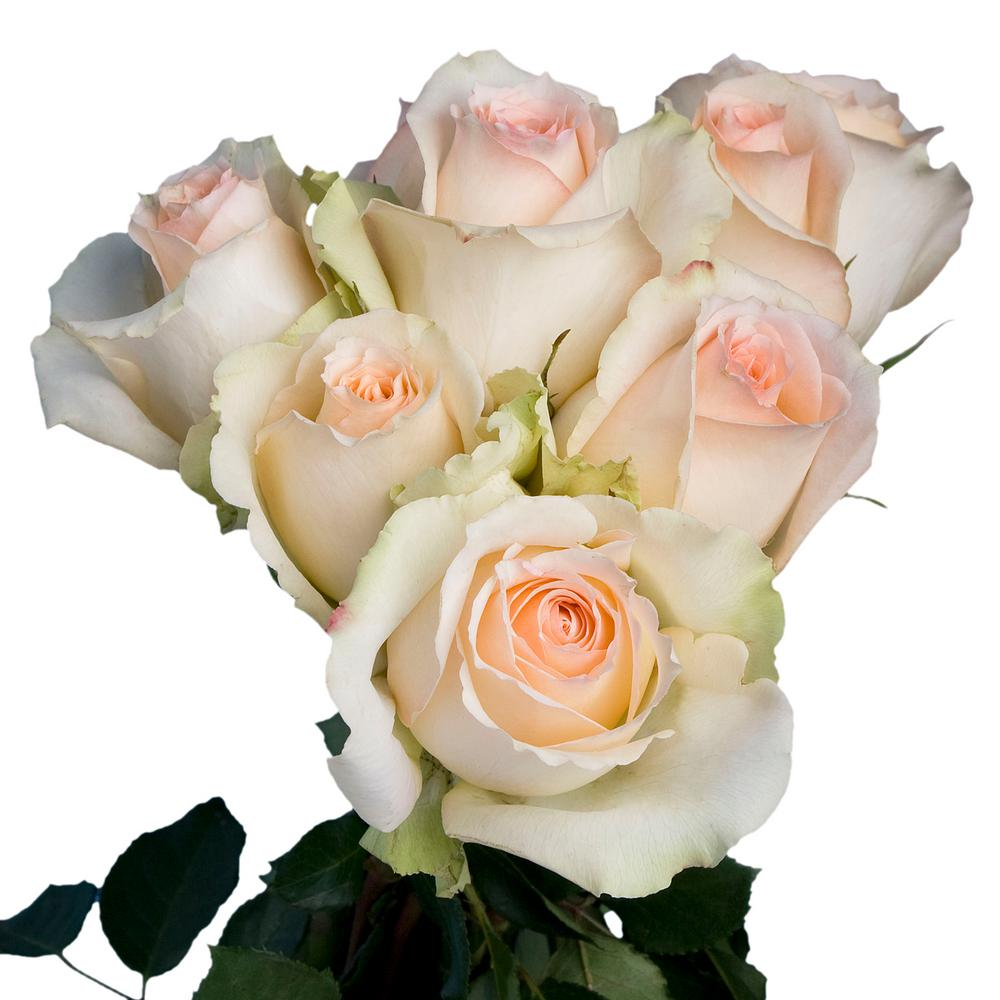 Globalrose Fresh Peach Color Roses 100 Stems Versilia Medium 100