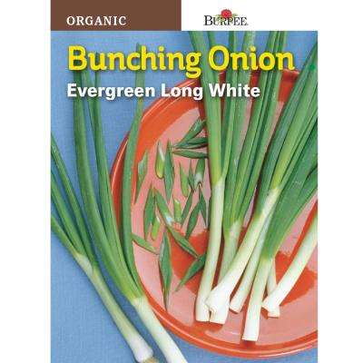 Onion Evergreen Bunching Seed
