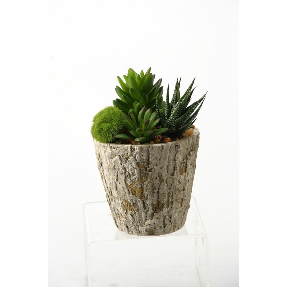 Indoor Aloe and Succulents in Weathered Oak Look Cement Planter
