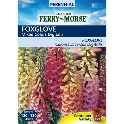 Foxglove Mixed Colors Seed