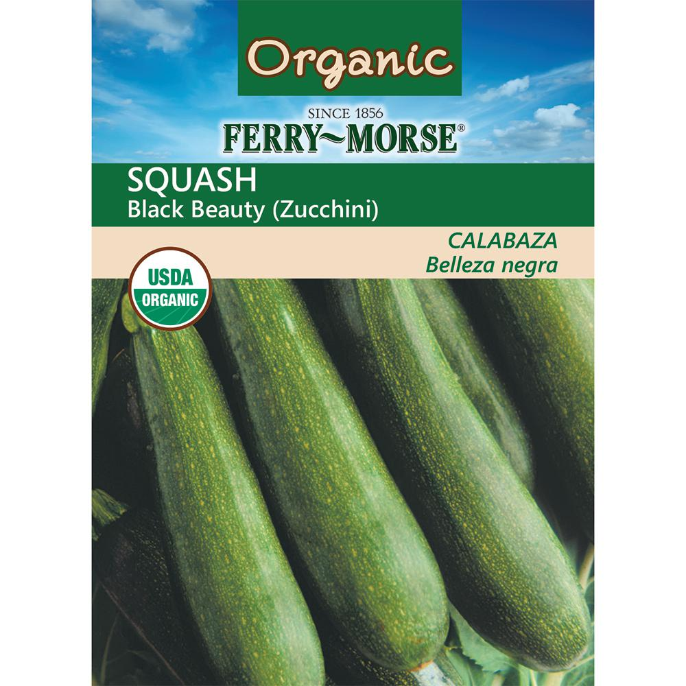 Squash Black Beauty Zucchini Organic Seed