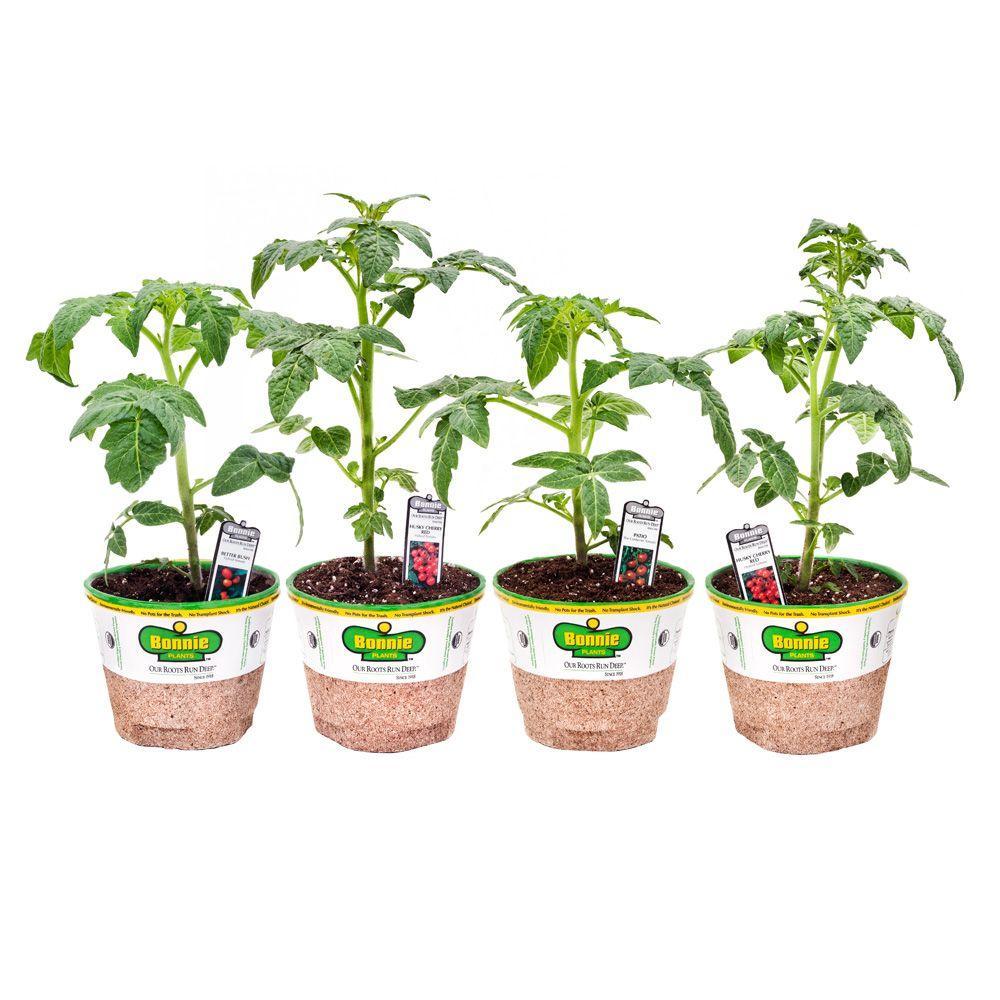 Bonnie Plants Sweet N' Heat Pepper Favorites (4-Plants)