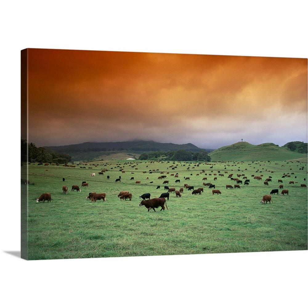 Greatbigcanvas Hawaii Maui Hana Ranch Pasture Many Cattle Grazing On The Land By Ron Dahlquist Canvas Wall Art 1405801 24 24x16 The Home Depot