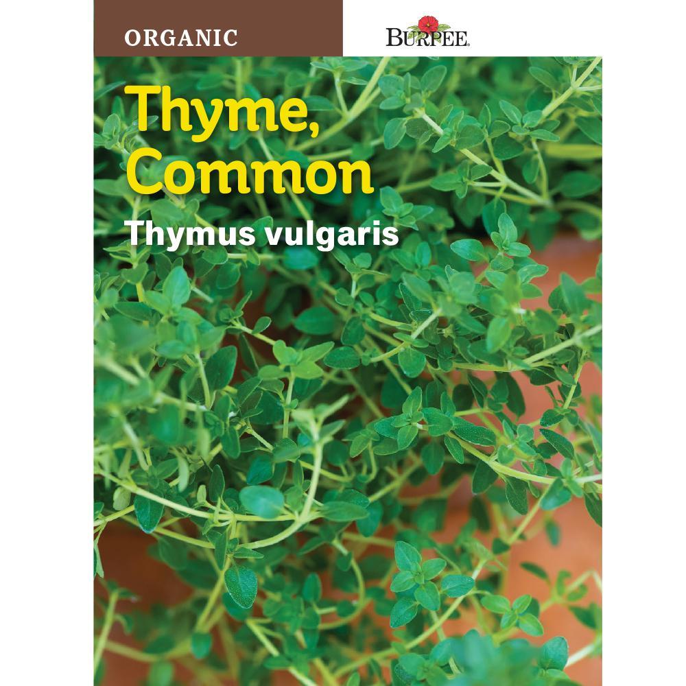 Herb Organic Thyme Seed