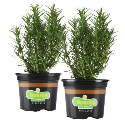 25 oz. Rosemary (2-Pack Live Plants)