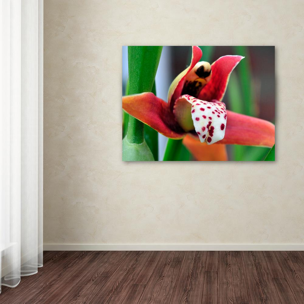 Little Red Orchid By Kurt Shaffer Printed Canvas Wall Art