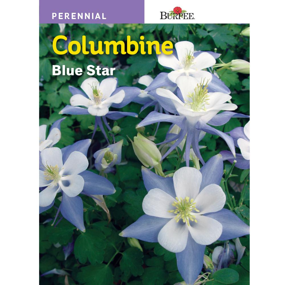 Burpee Columbine Blue Star Seed
