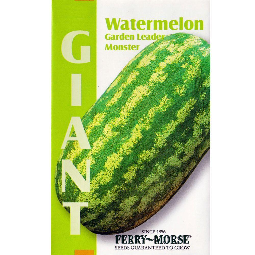 Giant Garden Leader Monster Watermelon Seed