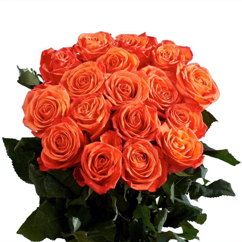 Fresh Wholesale Orange Roses (75 Extra Long Stems)