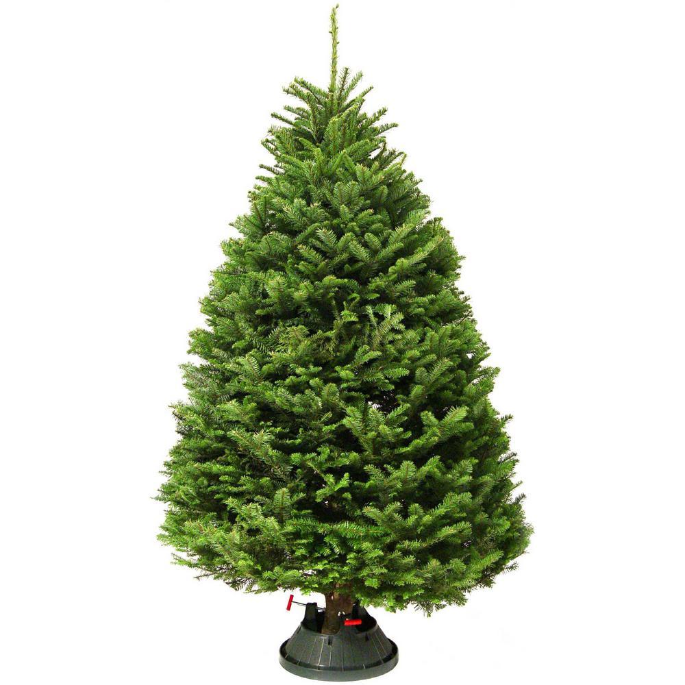 Freshly Cut Noble Fir Real Christmas Tree (Live - Real Christmas Trees - Christmas Trees - The Home Depot