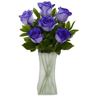 Gorgeous Deep Purple Rose Bouquet in Clear Vase (6 Stem) Overnight Shipping Included