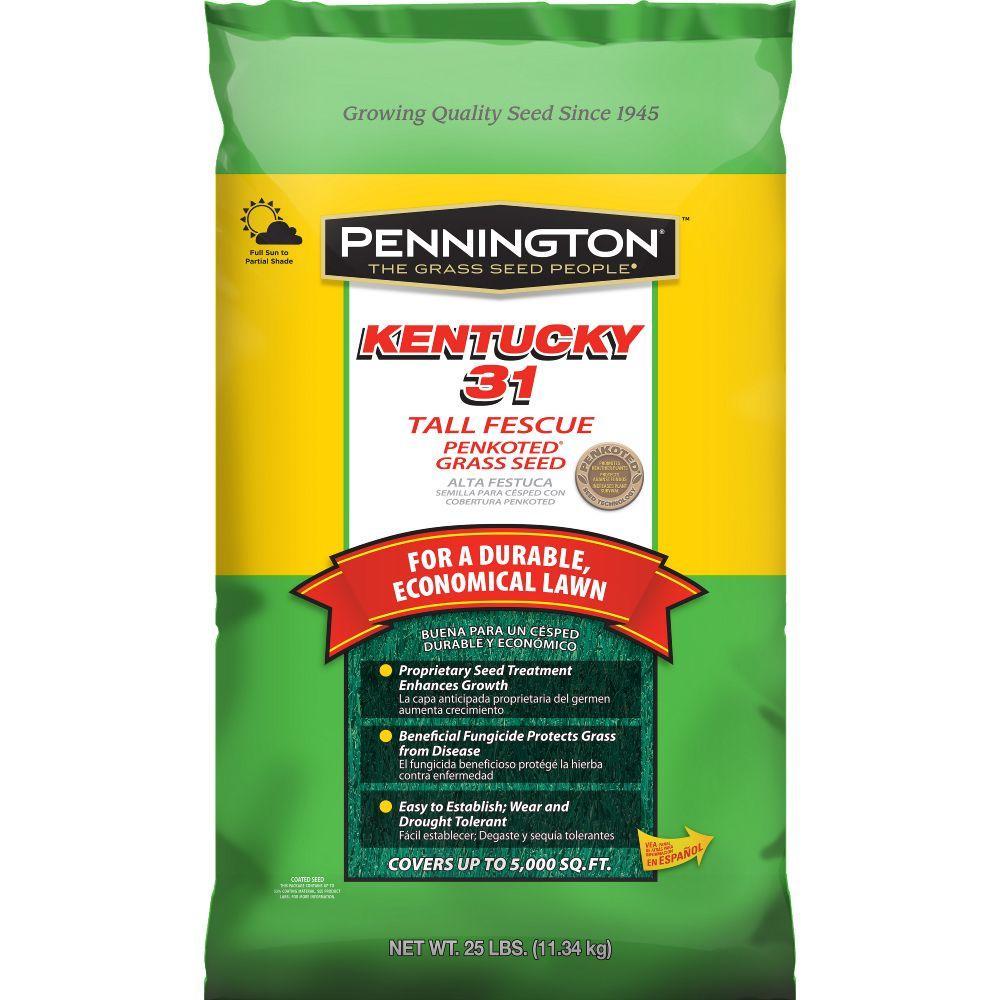 pennington kentucky 31 25 lb tall fescue penkoted grass seed