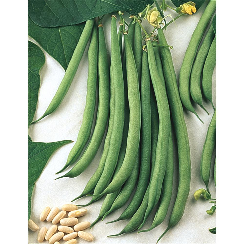 Bush Bean Sassy (0.5 lb. Seed Packet)