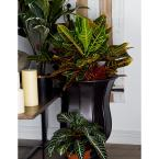 Black Iron Inverted Bell-Shaped Planters with Round Base (Set of 3)