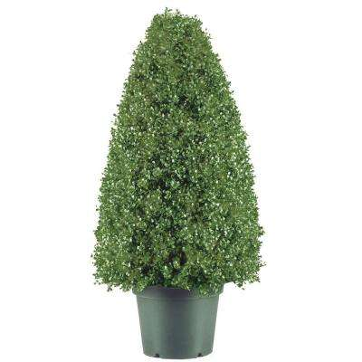 30 in. Boxwood Artificial Tree in Dark Green Round Plastic Urn