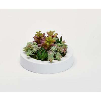 Mixed Succulents in 7 in. Round White Plastic Container