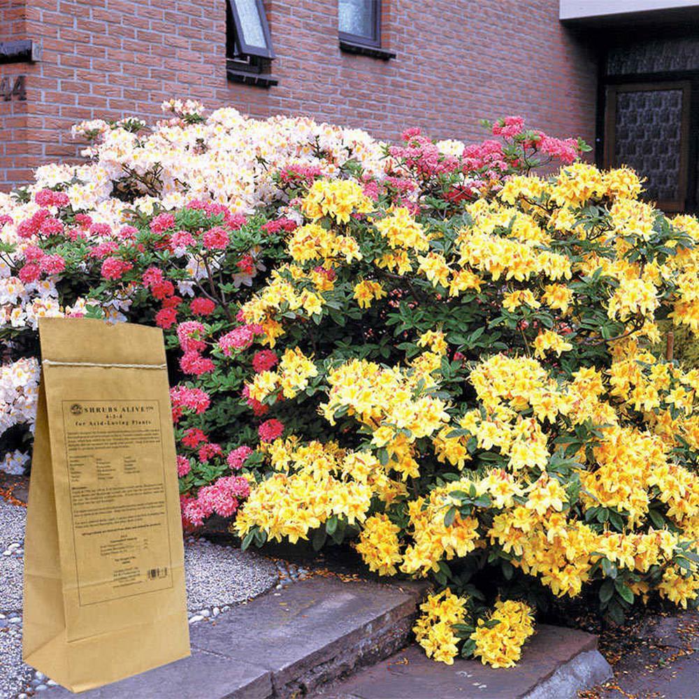 5 lbs. ShrubsAlive! Fertilizer for Acid Loving Plants